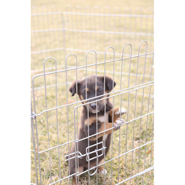 Galvanizado 6 ou 8 Meshes Pet Dog Playpen