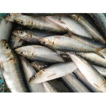 Свежая замороженная рыба сардины