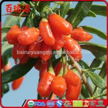 Сушеные ягоды годжи побочные эффекты санберст суперфуды органические сушеные ягоды годжи калорий в сушеных ягод годжи