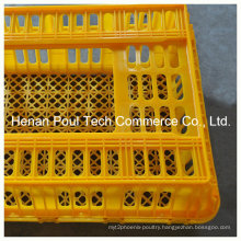 Plastic Chicken Transport Cage