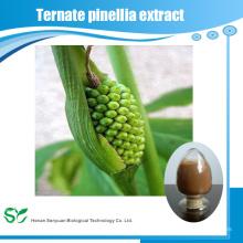 Extracto natural de alta calidad de Ternate Pinellia / polvo del extracto de Rhizoma Pinelliae