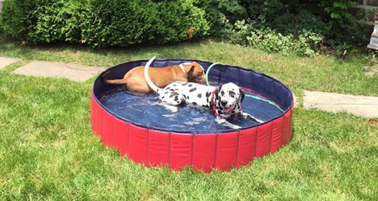 Dog Swimming Pool20201119195643