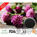 Factory Supply 100% Natural Red Clover Extract Powder in Bulk Isoflavones 8%