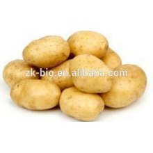Dry Potato Powder