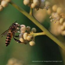Miel larga orgánica