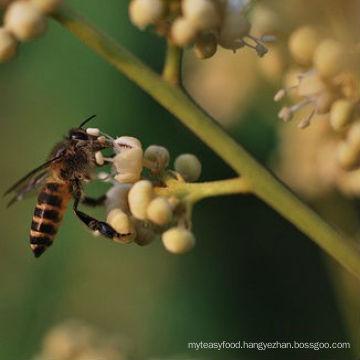 organic longan honey