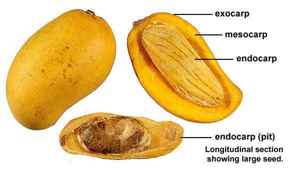 mango4b