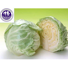 fresh green Chinese cabbage price