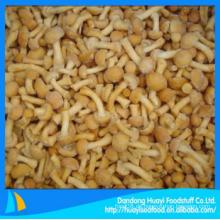 Billig gefrorene beste Qualität genügend nameko Pilz mit überlegenem Lieferanten