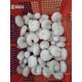 Camarão IQF sem cauda 1kg preço da bolsa rider Fresh Frozen IQF HLSO Vannamei Shrimp Price Venda por atacado