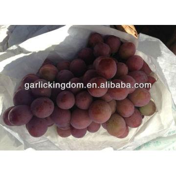 Mejor uva roja global / Yunnan uva roja / uva China