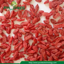 Livre de pesticidas goji / goji berries / wolfberry