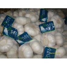 Exportar nuevo ajo chino blanco puro de cosecha