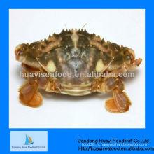 Crabe de boue vivant gelé Dandong Huayi
