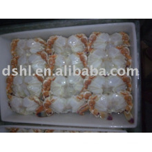 Cuerpo de cangrejo congelado