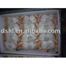 frozen crab body