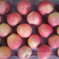 Chinois frais Qinguan Apple