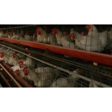Factory Price Professional automatic chicken Broiler battery cage system for sale