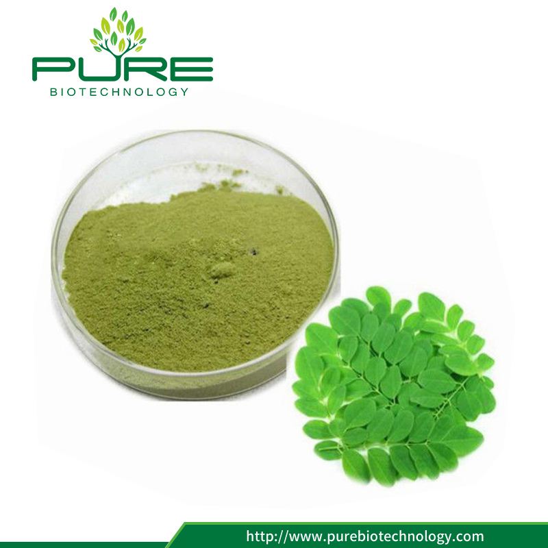 High Quality Moringa Leaf Extract