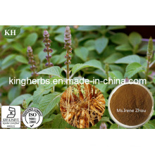 High Natural Forskolin 8%, 20% Coleus Forskohlii Extract