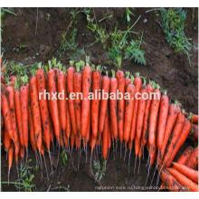 2017 новый свежий урожай моркови Спецификация М