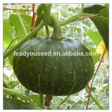 MPU07 Biqing темно-зеленые семена тыквы гибридные китайские семена овощей в