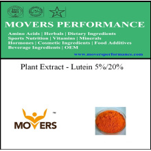 Organic Plant Extract --- Lutein 5%/ 20%