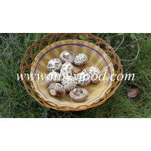 Prix de l'exportation de champignons de Shiitake de fleur blanche pour le paquet de 1kgs
