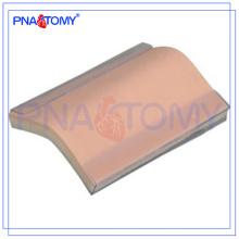 ПНТ-TM001 силиконовая кожа модель Шовный тренировочный Пэд (с подставкой) модель