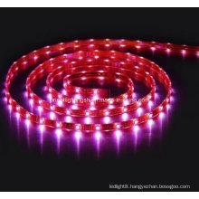 SMD 5060 High Power Flexible Strip-60 LEDs/M IP68 LED Light
