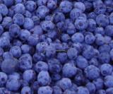 iqf wild blueberry