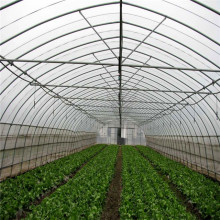 Fixed poly tunnel seed greenhouse for vegetable