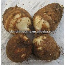 new crop fresh taro