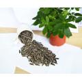 Semillas de girasol de Mongolia interior 363/601 girasol barato