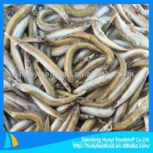 Frozen fish feed sand lance