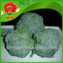Bulk chinês limpeza fresca brócolis