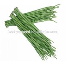MBE01 Obésité précoce maturité haute qualité graines de haricots longs pour la plantation