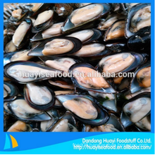 tasty frozen wholesale plenty of half shell mussel fast delivery
