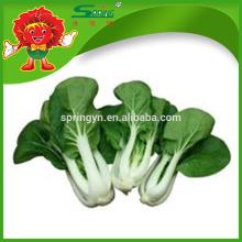 Repolho de flor de leite chinês livre de pesticidas