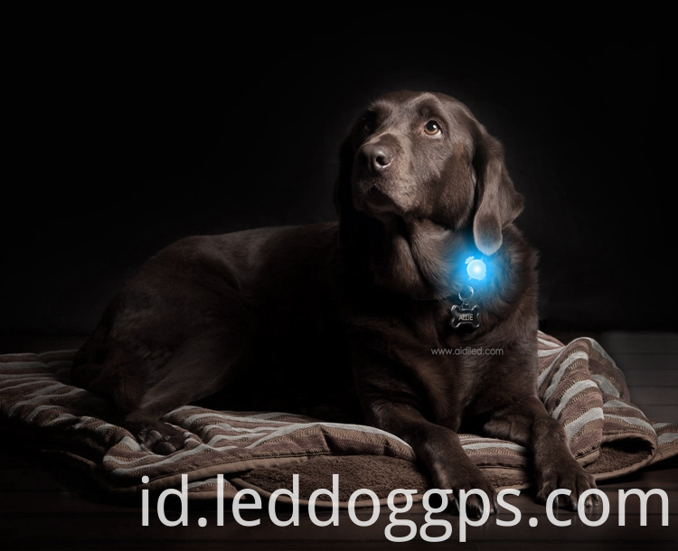 Led Light Collar Flasher
