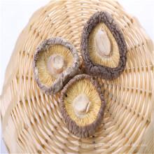 Vendas Diretamente da Fábrica Cogumelo Champignon Enlatado