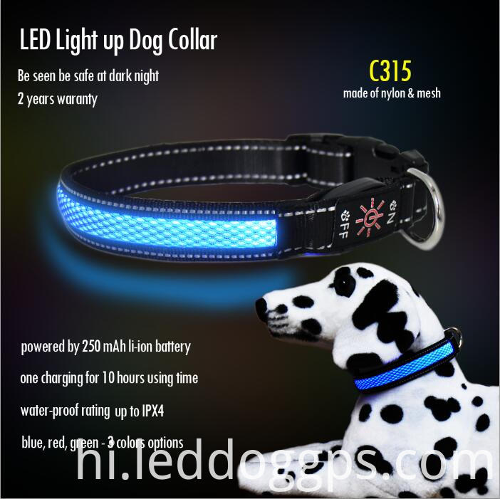 Light-Up Safety Dog Collar