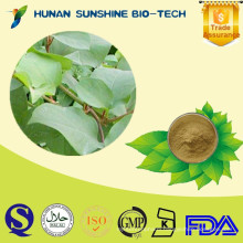 Herb Medicine Kava Extract powder Kavalactones Powder 70% 30%