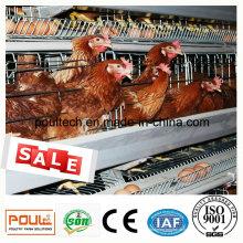 Клеточная система для курицы