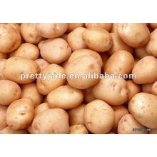Frische gelbe Kartoffel