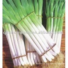 Китайский свежий зеленый лук