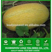 NSM08 Hale Bonne qualité prix des graines de melon sucré, sélectionneur de semences