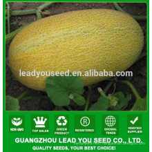 NSM08 Hale Good quality sweet melon seeds prices, seeds breeder