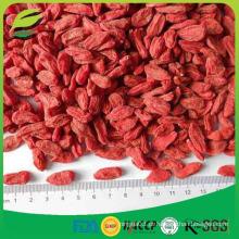 Berry Goji orgânico certificado pelo USDA