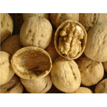 Ένας μεγάλος αριθμός των πωλήσεων των νέων καρύδια καλλιεργειών
